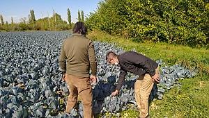Tarladan sofralara doğal ve ucuz sebze Esenlik'te